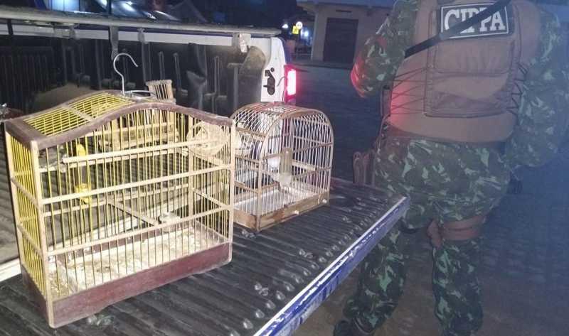 Homem é detido após ser flagrado com falcões e um tatu morto durante ação para reduzir crimes contra a fauna no sul da Bahia