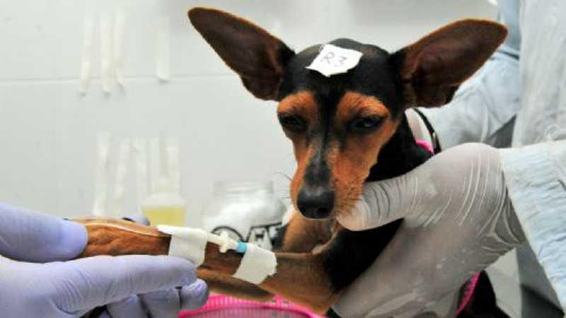 Castrações de cães e gatos estão suspensas temporariamente em Ilhéus, BA