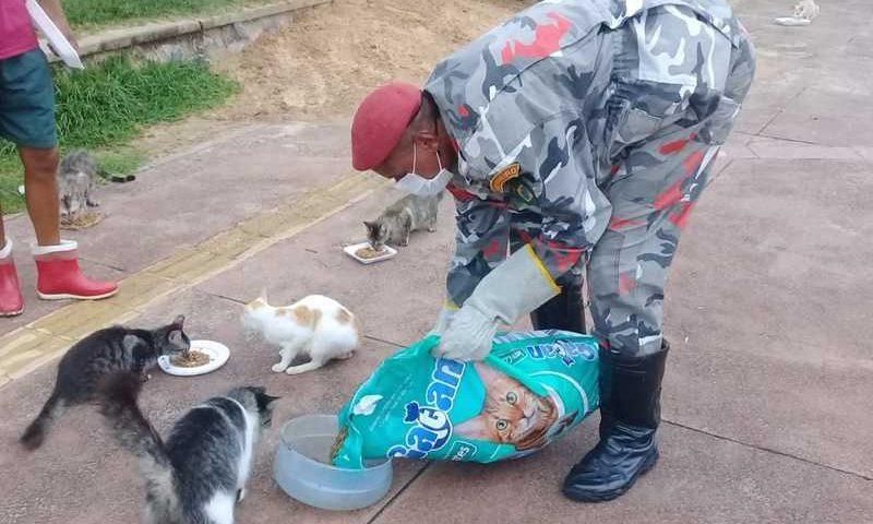 Bombeiros alimentam animais de rua em Salvador — Foto: Divulgação / Brigada K9 do Corpo de Bombeiros Voluntários