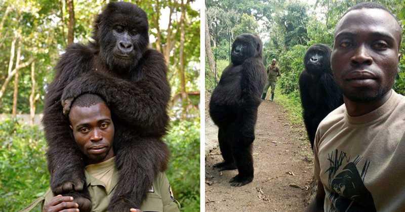 Doze guardas protetores de gorilas e chimpanzés são mortos no Virunga Park, no Congo