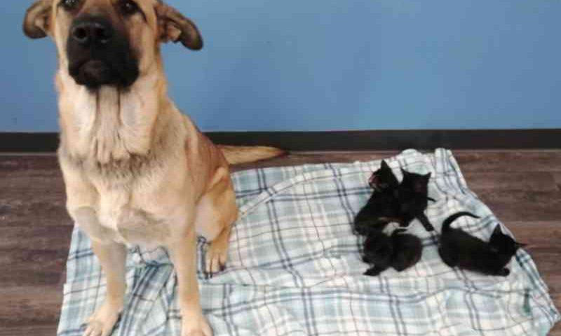 Cadelinha abandonada é encontrada em estrada cuidando de 5 filhotes de gatos