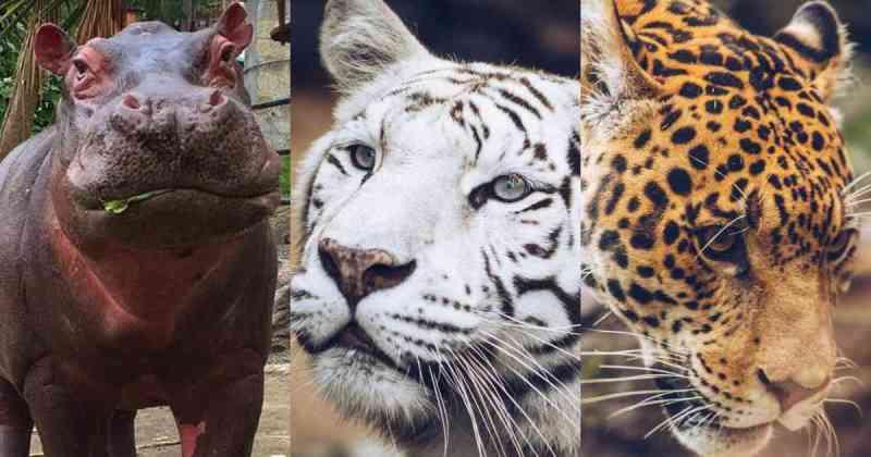 Pedido de SOS por comida para 700 animais do zoológico na Colômbia