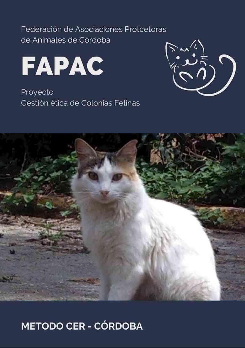 Cerca de 50 'alimentadores credenciados' levam comida para cem colônias de felinos em Córdoba durante o Covid-19