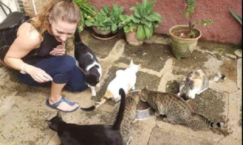 Cuba: protetora de animais denuncia que seu vizinho envenenou 5 de seus gatos
