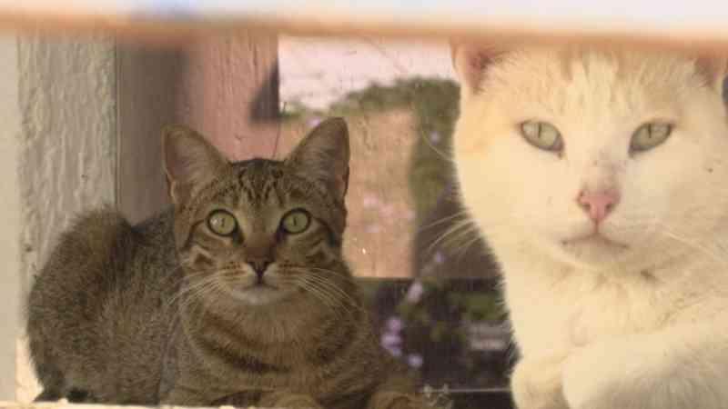 Juiz do DF nega pedido de ONGs para alimentar gatos que vivem no Iate Clube: 'A raça humana que está em risco'