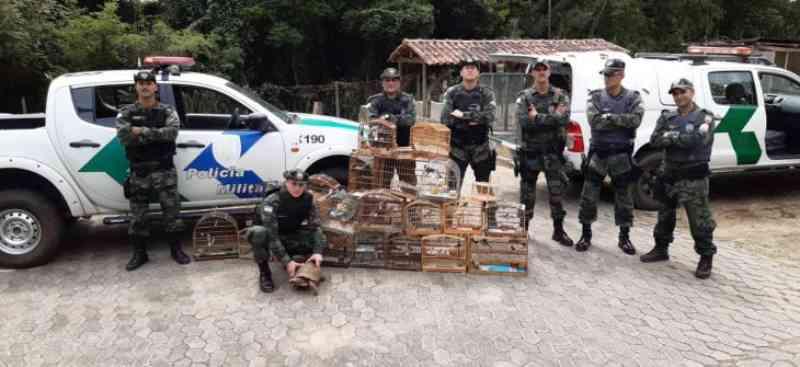 Polícia ambiental resgata 43 pássaros mantidos em cativeiro na Serra, ES