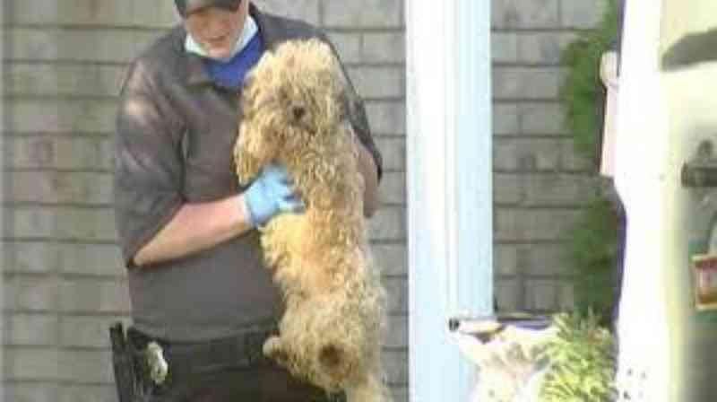Criadora que teve mais de 120 cães é condenada; juiz diz que condições eram 'terríveis'