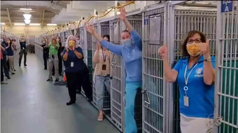 Quarentena faz crescer número de adoções e esvazia abrigos de animais nos EUA