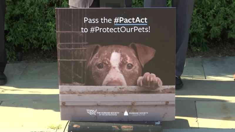 Esforço para tornar maus-tratos contra animal um crime federal nos EUA ganha apoio bipartidário