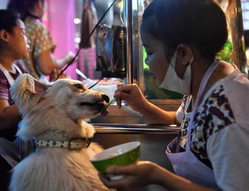 Animais são adotados em meio à pandemia, e voluntários comemoram canil vazio nos EUA
