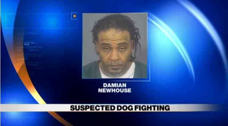Homem acusado de 7 crimes de maus-tratos contra animais, incluindo crueldade e rinha de cães