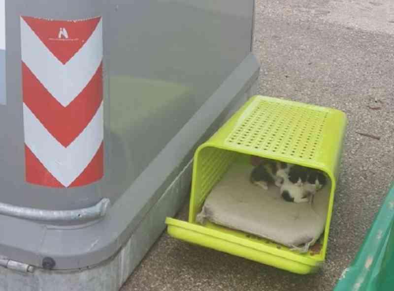 Confinamento deixa mais gatos recém-nascidos 'abandonados à própria sorte' na ilha de Maiorca, Espanha
