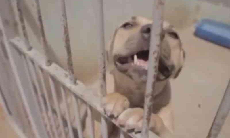 Abandono de animais domésticos em Goiânia aumenta cerca de 60% por conta da pandemia do coronavírus, diz ONG