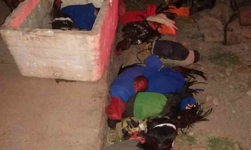 Mais de 20 pessoas são detidas em rinha de galo realizada em rancho de Porangatu, GO
