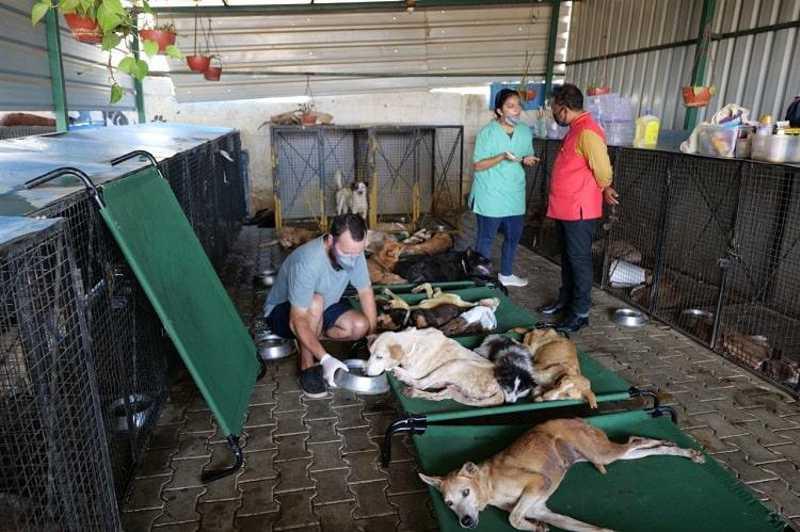 Coelhos, gatos e cães morrem de fome e sede em pet shops abandonados por proprietários na Índia