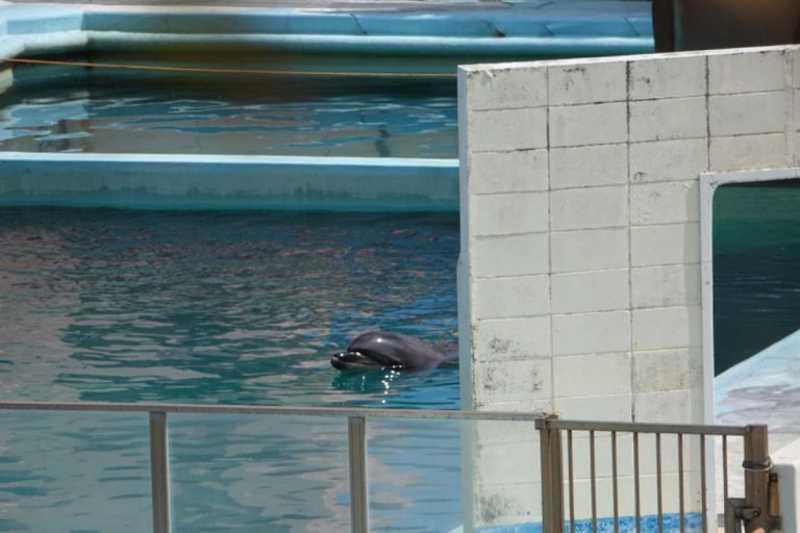 Adeus, Mel: golfinho solitário morre em aquário japonês abandonado