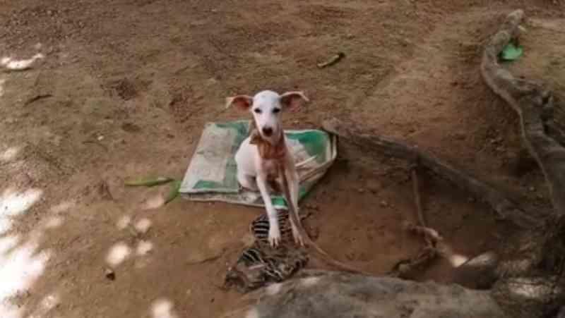 Policia de Grajaú (MA) é chamada por moradores que denunciaram maus-tratos contra cão