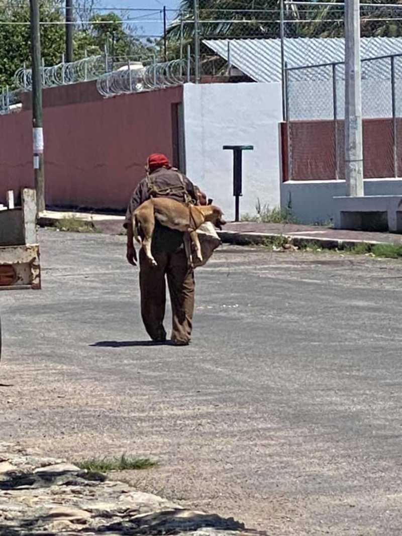 Idoso carrega cão nas costas sob sol escaldante para que ele não queime suas patas