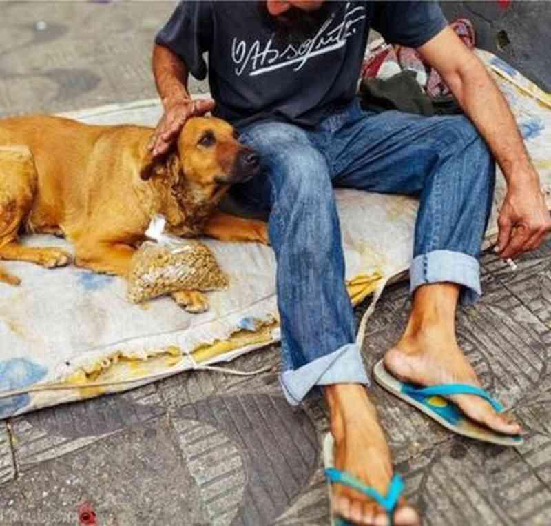 Cães e gatos de moradores de rua em BH recebem doações de ração em tempos de pandemia
