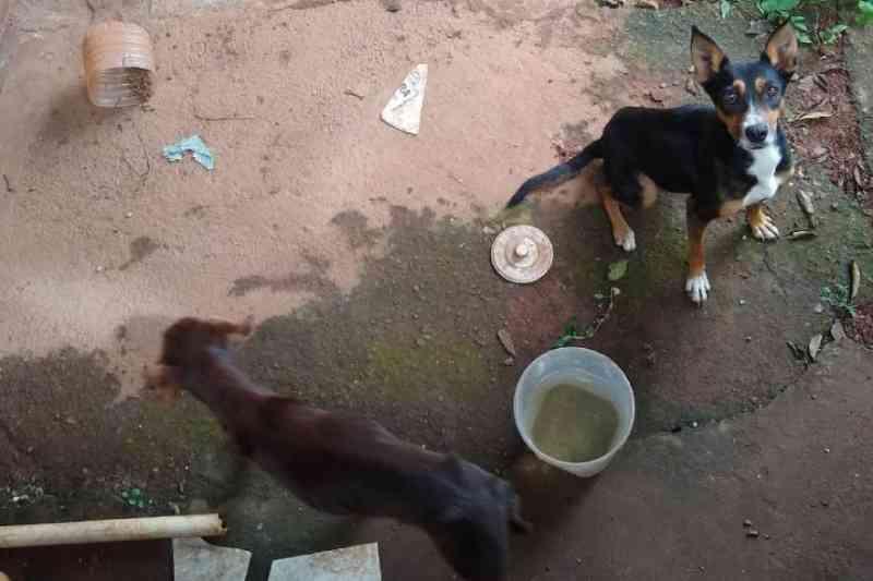 Cães abandonados há mais de 20 dias são resgatados em São Joaquim de Bicas, MG