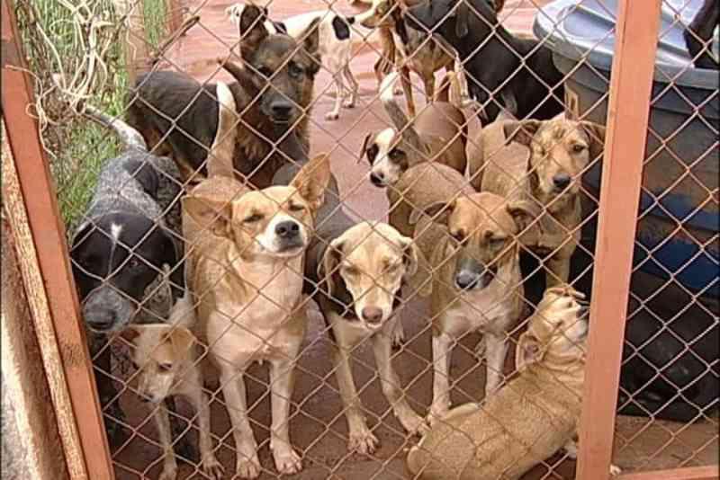 Devido ao coronavírus, doações feitas à Sociedade Uberabense de Proteção aos Animais diminuem