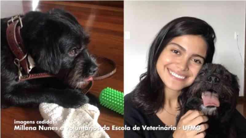 Animais do Hospital Veterinário da UFMG ganham lar temporário durante isolamento