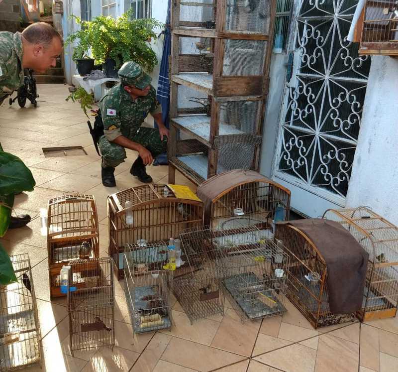 Homem é detido por maus-tratos e cativeiro irregular de 58 pássaros em MG