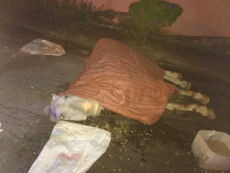 Cavalo vítima de maus-tratos morre nas ruas de São João del-Rei, MG