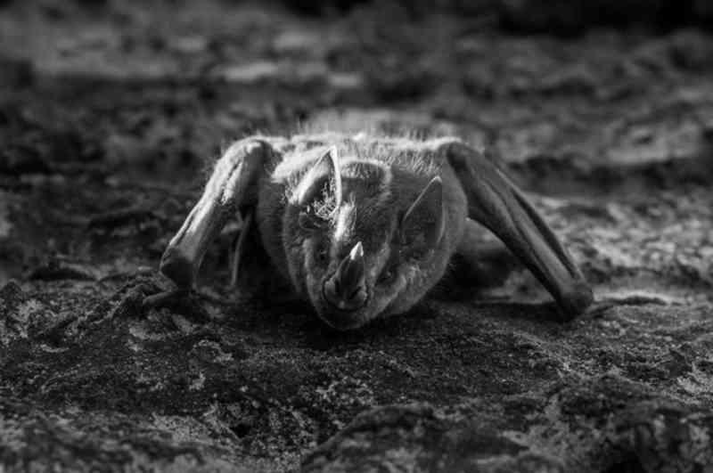 Fotógrafo retira morcego de depósito ao escutar ruído e o leva para casa: 'Veio dormindo de ponta cabeça'