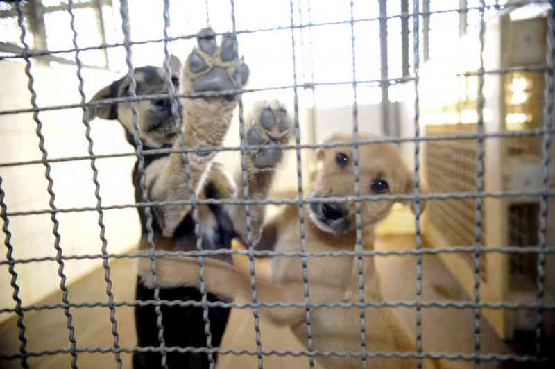 Durante pandemia, ONGs de animais no MS sofrem com falta de doações e adoção de animais