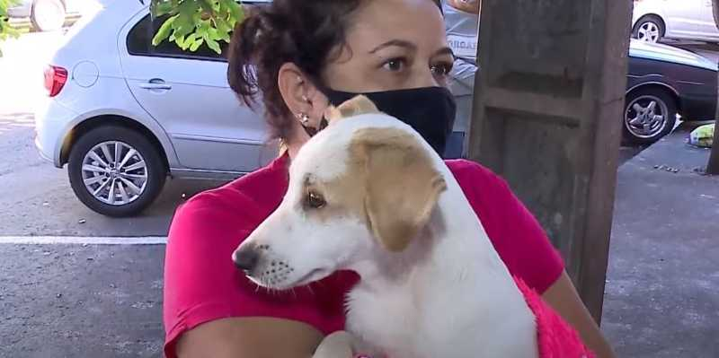 Homem que agrediu cachorro em Ibiporã (PR) se apresenta na delegacia e declara que estava irritado
