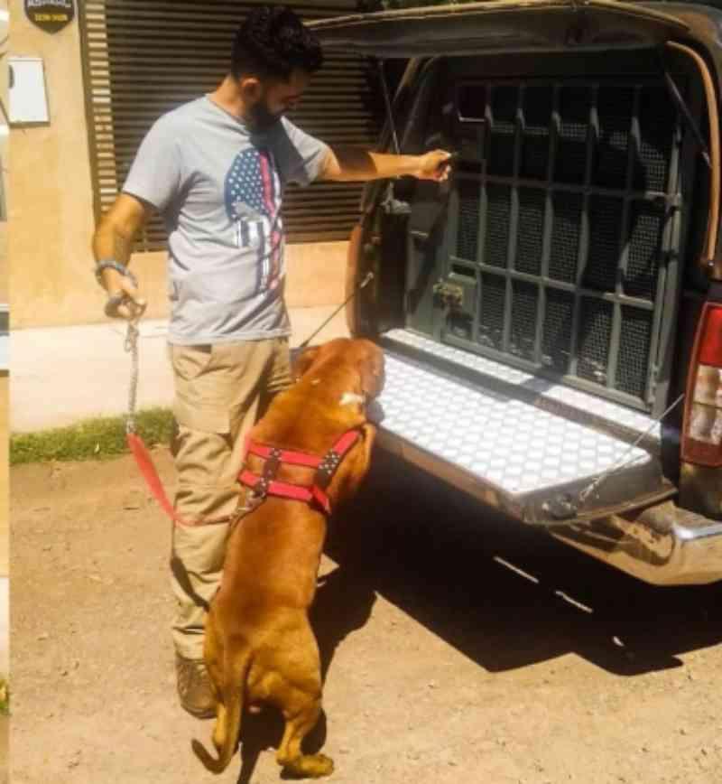 Homem é detido por dar pancadas em cachorro, em Ribas do Rio Pardo, MS
