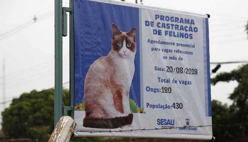 Agendamento de castrações de felinos no CCZ de Campo Grande (MS) segue suspenso