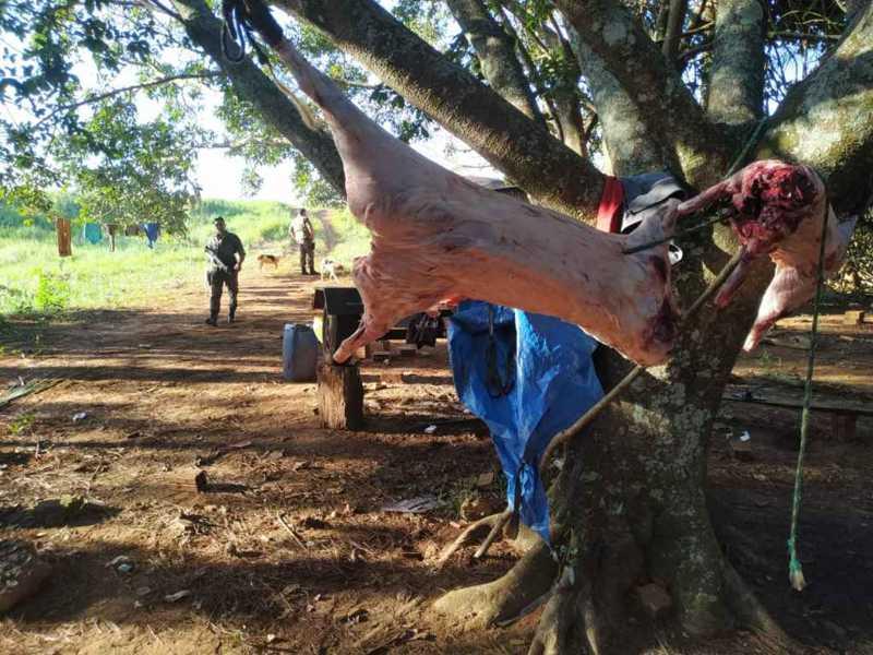 Apesar de permitida, caça de javali precisa de autorização do Ibama
