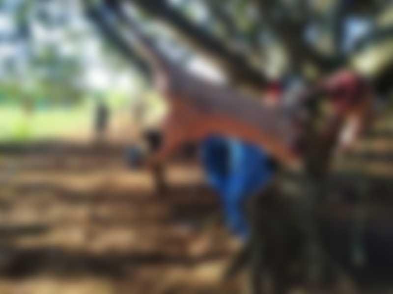 Cinco são presos com corpos de javali e 18 cachorros de caça em MS