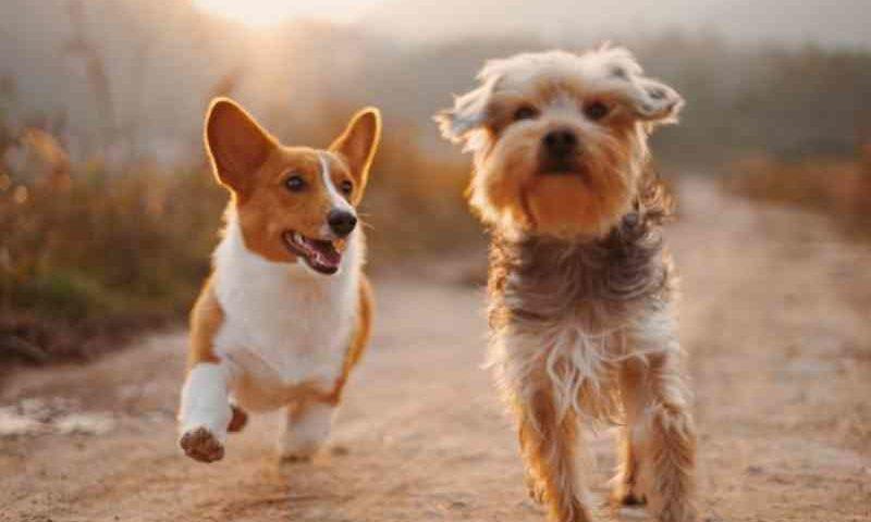 Prefeitura de Cuiabá (MT) procura pessoas responsáveis e interessadas em adotar um animal