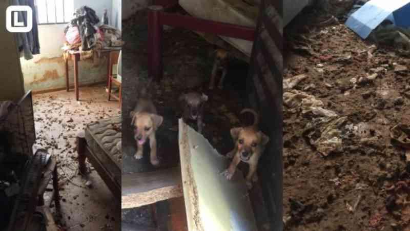 Vídeo: Cães são resgatados de casa cheia de fezes; eles se alimentavam de outro animal