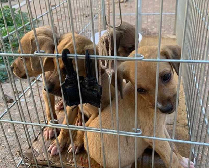 Animais foram resgatados — Foto: Projeto Lunaar/Divulgação