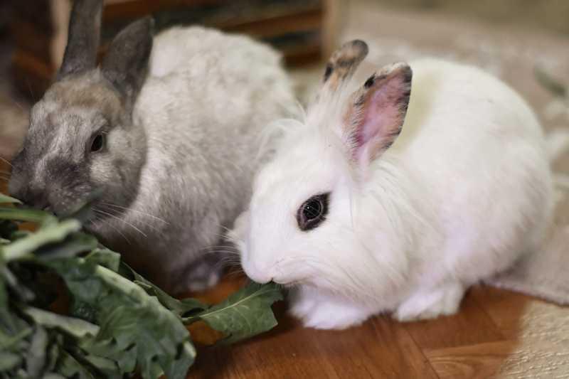 Organizações de proteção animal pedem à OMS o fim do comércio de animais silvestres