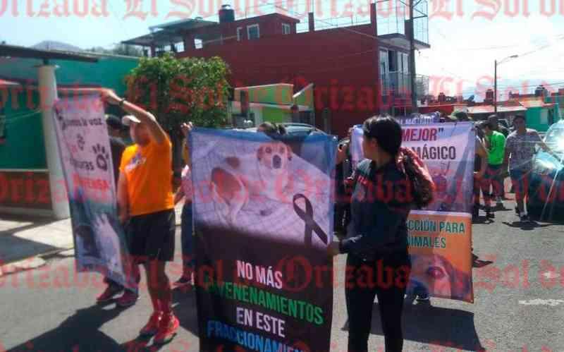 Veneno no México: 11 gatos, cinco cães e um gambá são mortos