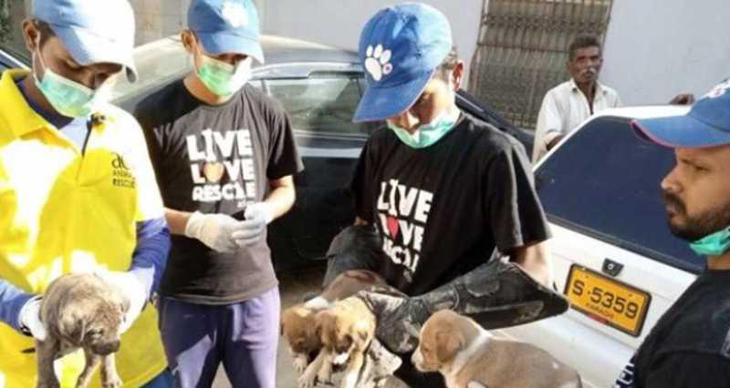 Animais são resgatados em mercado fechado no Paquistão por conta do coronavírus