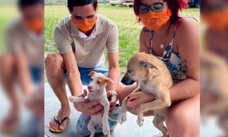 Adoção de animais do Centro de Zoonoses de Belém (PA) pode ser feita de forma virtual