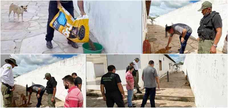 Cachorros apreendidos por populares em Jacobina do Piauí (PI) foram resgatados e estão recebendo cuidados