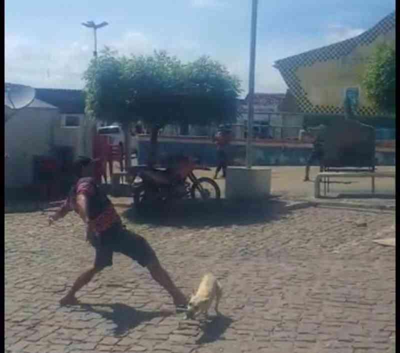 Cães são capturados e agredidos a pauladas e chutes em Jacobina do Piauí, PI; vídeo