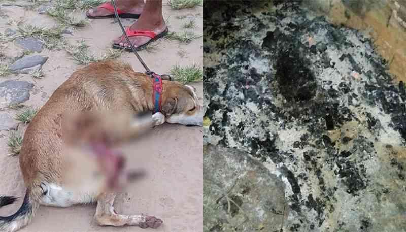 Dois cães são mortos durante Semana Santa em Pedro II, PI