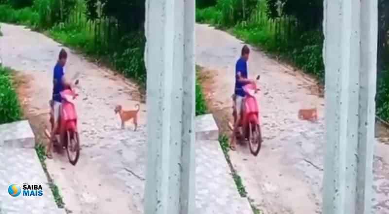 Vídeo de homem agredindo cadela em Picos (PI) deixa internautas revoltados