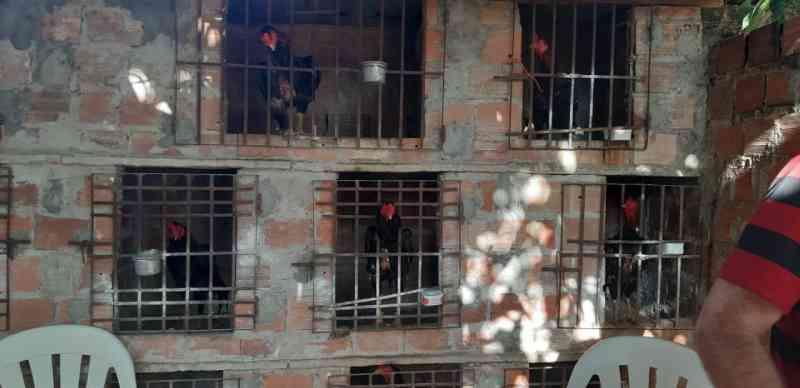 Polícia Ambiental apreende 18 galos usados em rinha na zona Sul de Teresina, PI