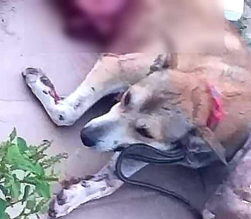 Homem é preso após esfaquear e matar cachorro que estava perto da sua casa no Piauí