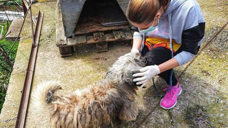 Cão ferido e maltratado é resgatado por associação na Madeira
