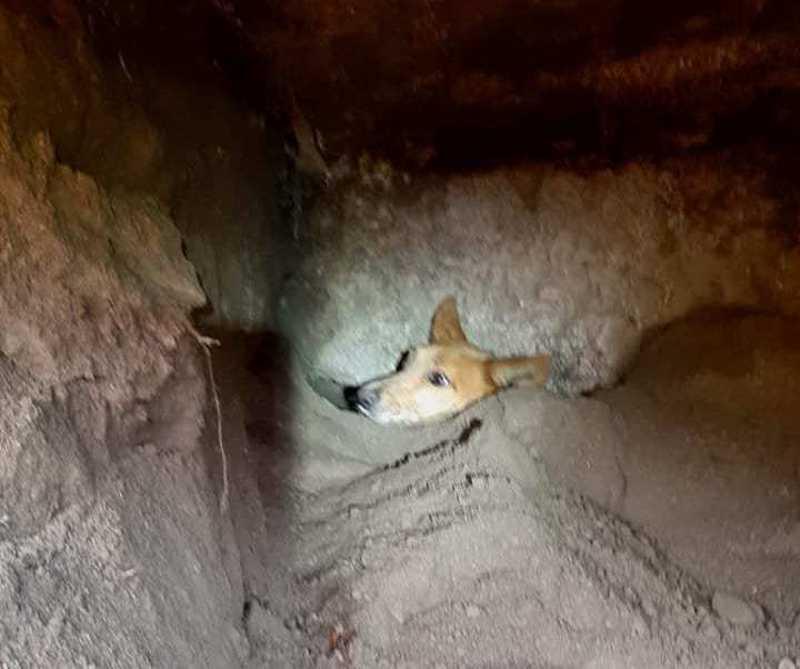 Bombeiros salvam cão soterrado debaixo de antiga fábrica em Pevidém, Portugal
